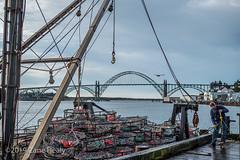 Crabbing (Zane's Photography) Tags: coast leicam10p leicasummicron50mmf20v newport oregon crab fisherman boat bridge bay morning seagull