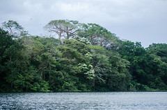 Forest view around Lake Alajuela (long time no signs of you ... I'll wait till you s) Tags: forest tropicalforests panama naturepanama madden dam