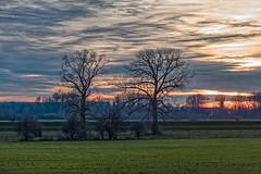 Am Rheindamm - Abendstimmung (KL57Foto) Tags: germany december nrw dezember landschaft nordrheinwestfalen monheim 2019 monheimamrhein omdem1 kl57foto winter olympus rheindamm