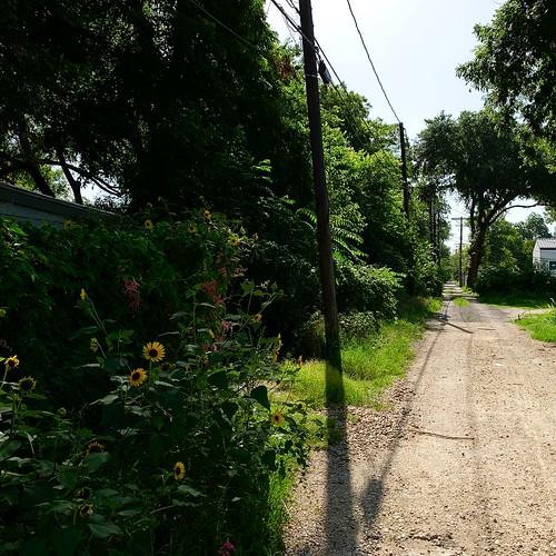 Alley Shadows & Flowers