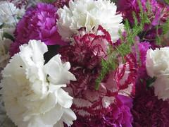 Christmas Carnations in Russet, Magenta and White (raaen99) Tags: christmas merrychristmas christmas2019 celebration festival festive festivities carnation dianthus caryophyllus pink magenta white russet red candystripe flowers floral flora petal petals enmasse massed bunched bunchofflowers floralarrangement fern asparagusfern green dianthuscaryophyllus table tabletop vase glass glassvase arrangement