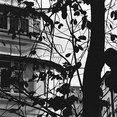 (a.pierre4840) Tags: olympus om3 zuiko 100mm f28 35mmfilm jchstreetpan400 bw blackandwhite noiretblanc 11 squareformat architecture tree silhouette kowloon hongkong shadow