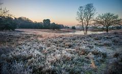 Hot chocolate weather (Ingeborg Ruyken) Tags: ochtend morning sunrise cold 500pxs ice natuurmonumenten boxtel natuurfotografie autumn fall kampina herfst