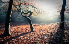 Pretty laid back (Ingeborg Ruyken) Tags: ochtend morning sunrise tree 500pxs sun natuurmonumenten boxtel natuurfotografie autumn fall kampina herfst