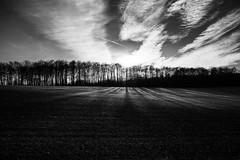 Winter`s bone (Black&Light Streetphotographie) Tags: mono monochrome lichtundschatten lightandshadows urban nahaufnahme nature natur himmel clouds sky tiefenschärfe wow dof depthoffield fullframe vollformat sony sonya7rii noir blackandwhite bw blackwhite bokeh bokehlicious blur blurring