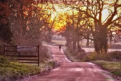 Early morning walk.... (fionarosegunn) Tags: frostymorning frosty northamptonshire countryside walking wintermorning sunrise earlymorning