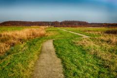 walk the line (stevefge) Tags: 2019 gelderland parklingezegen winter park landscape nederland netherlands nl nikon nature natuur reflectyourworld path horizon reed