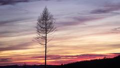 Last tree standing (Pascal Riemann) Tags: abendstimmung availablelight baum pflanze sonnenuntergang abendrot sauerland deutschland menden natur silhouette dusk germany nature sunset umriss afterglow eveningmood plant sunsetglow