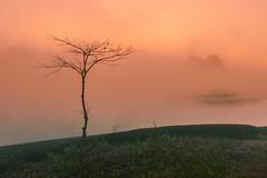 _J5K3360.0112.Tân Lập.Mộc Châu.Sơn La (hoanglongphoto) Tags: asia asian vietnam northvietnam northernvietnam northwestvietnam landscape scenery vietnamlandscape vietnamscenery mocchaulandscape nature naturelandscape canon tâybắc sơnla mộcchâu tânlập phongcảnh phongcảnhmộcchâu hoanglongphoto mist sươngmù earlyfrost earlymorningfog sươngsớm mocchausfog sươngmùmộcchâu sunrise bìnhminh happyplanet asiafavorites canoneos1dsmarkiii zeissdistagont235ze tea chè teahill đồichè tree cây 1tree 1cây