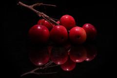Winter Warmth... (Ageeth van Geest) Tags: redux macromondays ageethvangeest macro stilllife stilleven nature red apple reflection malusredsentinel sierappel 17thcentury canoneosm6 crazytuesday