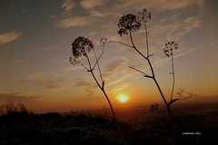 Amanecer en Sierra Camorra. Alameda (Málaga) (lameato feliz) Tags: contraluz amanecer alameda sierra camorra
