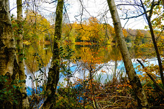 Woodland Reflections (2019) Autumn (Adam Swaine) Tags: trees lakes ponds autumn autumncolours autumnviews seasons naturelovers nature uk ukcounties rural beautiful leaves adamswaine britain british england english 2019 counties countryside waterside water sussex westsussex flora paths walks reflections