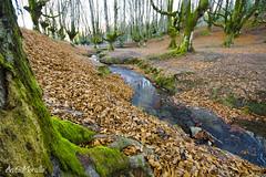 Otzarreta (lautada) Tags: hayedo otzarreta bizkaia vizcaya euskalherria euskadi paisvasco bosque monte musgo arbol naturaleza rio agua