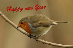 Happy New Year to all my Flickr friends, and thank you for all your support and laughs 😂 (Bogger4.) Tags: robin happynewyear 2020 friends celebration fun laughs drink happy sunrays5 coth5