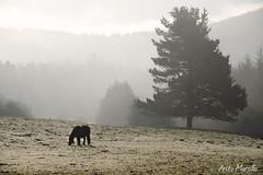 Gorbeia (lautada) Tags: caballo ganado niebla gorbea gorbeia alava araba bizkaia vizcaya euskadi euskalherria paisvasco montaña naturaleza arbol