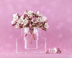 in the pink - for macro mondays redux (Emma Varley) Tags: macromondays bottlecap pink indoors flowers arrangement posy vase bottle top cap stopper perfume miniature closeup viburnum blossom
