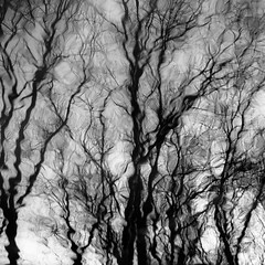 Trees In Water 157 (noahbw) Tags: captaindanielwrightwoods d5000 desplainesriver dof nikon abstract blackwhite blackandwhite blur branches bw depthoffield distortion forest monochrome natural noahbw reflection ripples river square trees water winter woods