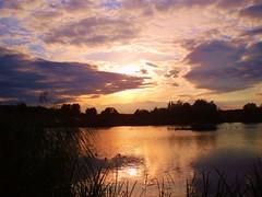 2011-08-28 Gdańsk spacer staw Wróbla  (3) (aknad0) Tags: polska gdańsk jasień krajobraz stawy zachódsłońca ptaki