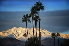 palm springs sunrise (jody9) Tags: palmsprings mountains palmtrees snow december winter desert