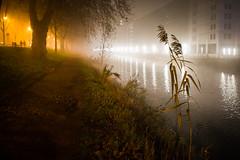 Fog atmosphere (Lasorigin) Tags: fleurs plante strasbourg pont paysage arbre bâtiment bridge trees light building water bench landscape eau fowers lampadaire banc