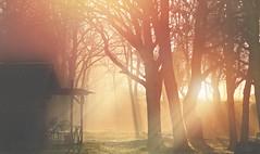 A Winters Sunrise... (KissThePixel) Tags: sunrise p1000 nikon nikoncoolpixp1000 coolpix longacremanor kissthepixel winter winterscene fog frost december beautiful