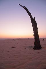 Transition Of Colour (peterkelly) Tags: digital canon 6d africa namibia namibdesert namibnaukluftreserve intrepidtravel capetowntovicfalls sesriemcamping sunset evening dusk snag tree wood sandy sand desert