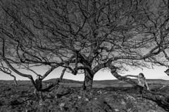 Perfect Day (FadeToBlackLP) Tags: tree oak family love happy climbing trees treeclimbing perfect beautiful wide angle wideangle