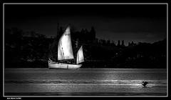 Le voilier et le Cormoran.. (jmfaure29) Tags: jmfaure29 sky seascape sea mer nature nb canon paysage bretagne finistère monochrome