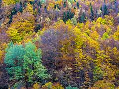 Si la vida son colores. (Jesus_l) Tags: europa españa huesca torla valledeordesa pirineos otoño jesúsl