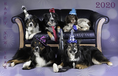 Happy New Year (The Papa'razzi of dogs) Tags: 2020 happynewyear dogs
