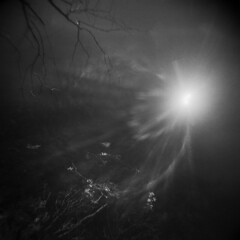 Beckoning Depths (LowerDarnley) Tags: holga lake sun reflection winter breakheartreservation saugus ma branches dark darkwater flare