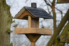 2019 December 30th - The new bird table (1) (JTC1976) Tags: birdfeeder bird birds nikond3200 nikon d3200 bluetit paridae garden gardenbirds