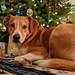 My granddog, Archer