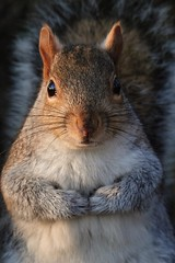 365 - Image 364 - Squirrel... (Gary Neville) Tags: 365 365images 6th365 photoaday 2019 sony sonyrx10iv sonyrx10m4 rx10iv rx10m4 garyneville