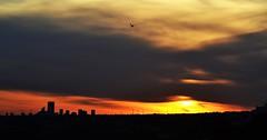 Sunset in Benidorm - Atardece en Benidorm (En memoria de Zarpazos, mi valiente y mimoso tigre) Tags: sunset atardecer skyfire skyscape skyred benidorm altea tramonto clouds sun silhouette gaviota seagull gabbiano nikon