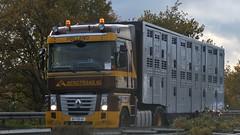 NL - Bergtrans Renault Magnum (BonsaiTruck) Tags: lkw lastwagen lastzug truck trucks lorry lorries camion caminhoes bergtrans renault magnum livestock