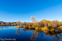 DSC_3674 (farajalhattab) Tags: patagonialake arizona nikon d7200 water trees landscape