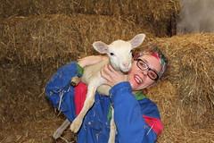 A Happy and Healthy 2020 for Everyone. !!! (excellentzebu1050) Tags: livestock lamb farm dairyfarm indoors happynewyear animal straw