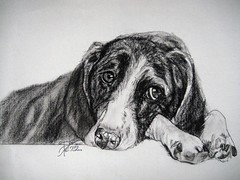 I'LL BE A GOOD BOY (Sketchbook0918) Tags: dog bassethound pet portrait illustration sketch study charcoal pencil paper adorable sweet drawing
