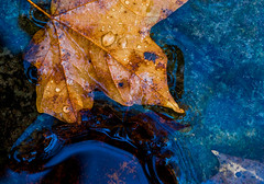 Floating Art (Bernie Kasper (6 million views)) Tags: art berniekasper blue beautiful color cliftyfallsstatepark cliftyfalls creek d200 evening family fall fun hiking home indiana jeffersoncounty light landscape love leaf leaves longexposure madisonindiana macro nature nikon naturephotography new national nikkor outdoors outdoor old outside photography park photo photos raw sigma statepark travel trail unitedstates usa water hot