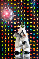 saturday night fever (auntneecey) Tags: saturdaynightfever discoball lightbrite 365the2019edition 3652019 day364365 30dec19 toys dinosaurs nothingisordinary playing