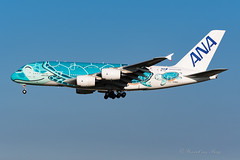 ANA_A388_JA382A_TorquoiseHonu_NRT_Nov2019 (Yannick VP) Tags: civil commercial passenger pax transport aircraft airplane aeroplane jet jetliner airliner nh ana allnippon airways airbus a380 380800 a388 superheavy ja382a turquoise honu special livery paint scheme tokyo narita international airport rjaa nrt japan jp november 2019 approach landing finals runway rwy 34l aviation photograhpy planespotting airplanespotting
