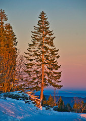 Pine tree at sunset on the Feldberg, Southern Black Forest (echumachenco) Tags: evening eveningpink eveninglight sunset winter snow december tree pine wood sky landscape outdoor feldberg serene blackforest schwarzwald hochschwarzwald badenwürttemberg germany deutschland nikond3100