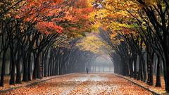 Otoño (Eslegendario) Tags: otoño autumn seasons estaciones tiempo naturaleza nature navidad añonuevo newyear happynewyear happyholidays merryxmas merrychristmas feliznavidad felicesfiestas genial flickr popular