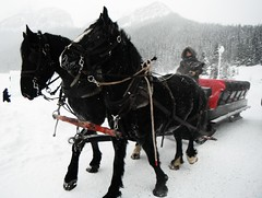 Lake Louise Parks Canada (Mr. Happy Face - Peace :)) Tags: horse sleigh ride outdoors international art2019