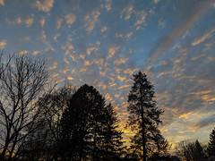IMG_20191225_071930-2 (Paul-W) Tags: melrose massachusetts unitedstatesofamerica sky sunrise clouds trees 2019