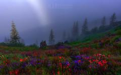 Mt. Saint Helens Fogbow (Christina Angquico) Tags: mountsainthelens pacificnorthwest wildfowers fogbow paintbrush lupine nikon 1424mm d750 christinaangquico