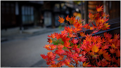 It Burns (niggyl :)) Tags: japan fujifilm nihon nakatsugawa xh1 gifuprefecture walkjapan nakasendoway xtranssensor fujifilmxh1 fujixh1 backlight maple dof bokeh depthoffield alleyway fujinon bokey colorefexpro bokelicious dxolabs colorefexpro4 fujixmount nikcollection autumn japanesemaple autumnlight tsumagojuku autumn2019 tsumagoposttown