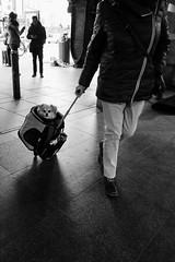 hot dog (koen_jacobs) Tags: hotdog streetphotography blackandwhite antwerp