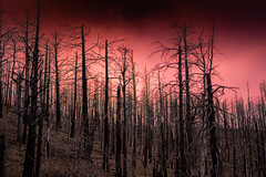 7 years after the Little Bear Fire (joncutrer) Tags: newmexico fire forest ruidoso wildfire burn burnt burning disaster devastating lincolnnationalforest